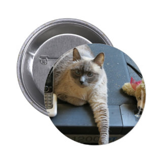 Jasmine the Siamese Cat takes care of business Pin