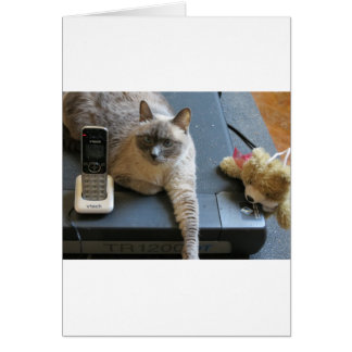 Jasmine the Siamese Cat takes care of business Cards