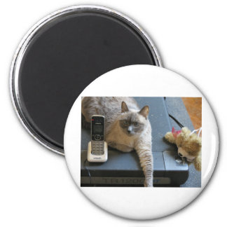 Jasmine the Siamese Cat takes care of business Magnet