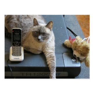 Jasmine the Siamese Cat takes care of business Post Card