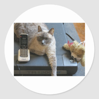 Jasmine the Siamese Cat takes care of business Sticker