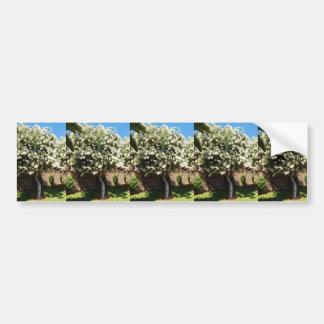 Jasmine Tree In Bloom Car Bumper Sticker