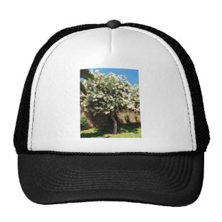 Jasmine Tree In Bloom Hat