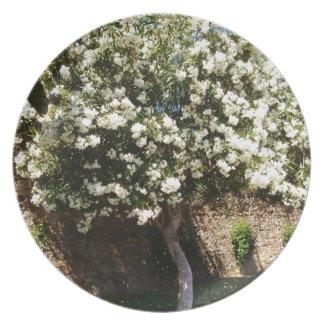 Jasmine Tree In Bloom Party Plate