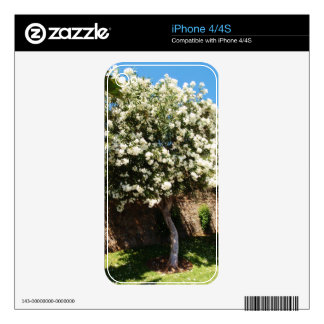 Jasmine Tree In Bloom Skins For The iPhone 4S