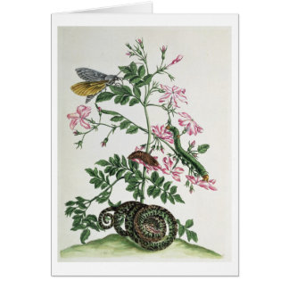 Jasmine: with snake, moth, caterpiller and chrysal card