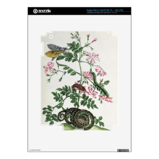 Jasmine: with snake, moth, caterpiller and chrysal iPad 3 decal