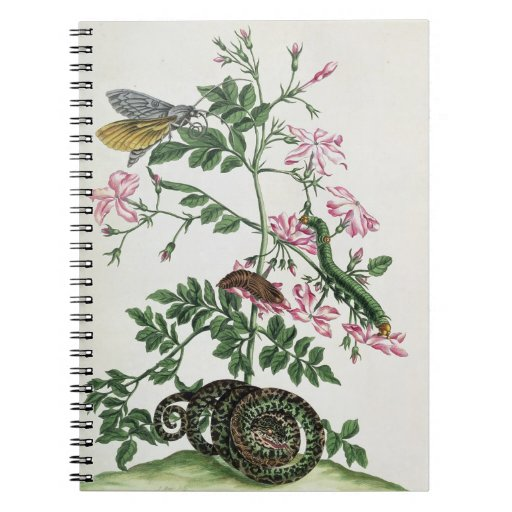 Jasmine: with snake, moth, caterpiller and chrysal notebook