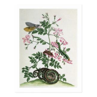 Jasmine: with snake, moth, caterpiller and chrysal postcard