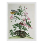 Jasmine: with snake, moth, caterpiller and chrysal poster