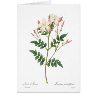 Jasminum grandiflorum card