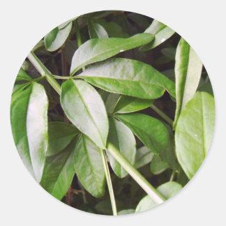 Jasminum meznyi classic round sticker