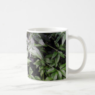 Jasminum meznyi coffee mug