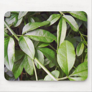 Jasminum meznyi mouse pad