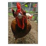 Jaspe la tarjeta de nota de la gallina de Welsumme