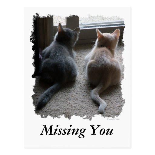 """Jaspe y gatito de Kaylee """"que le falta"""" postal"""