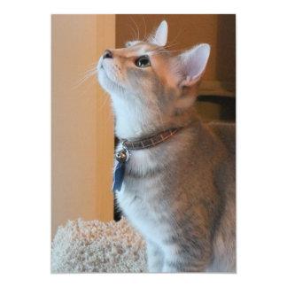 Jasper Customizable Kitten Photo Announcements