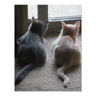 Jasper & Kaylee Kitten Announcements