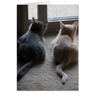 Jasper & Kaylee Kitten Blank Note Card