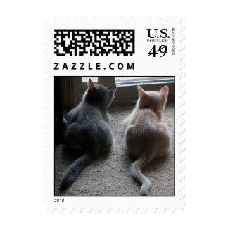 Jasper & Kaylee Small Kitten Postage Stamps