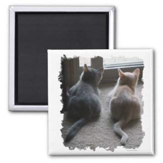 Jasper & Kaylee Square Kitten Magnet