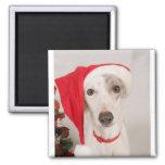 Jasper the Christmas Dog Magnet