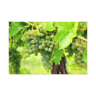 JAV CANVAS 1 St. Croix green grapes 2013