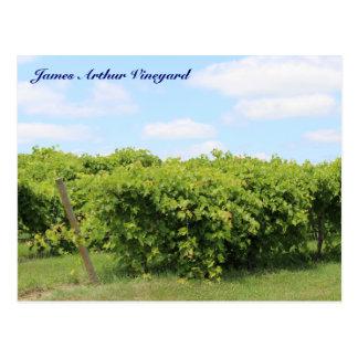 JAV Grapevines postcard 13