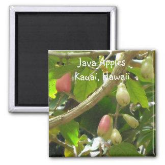 Java Apples 2 Inch Square Magnet