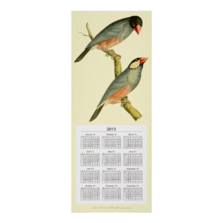 Java Sparrow 2013 calendar, Poster