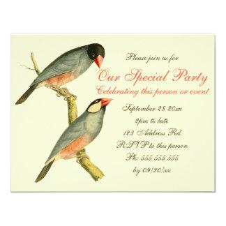 "Java Sparrow 4.25x5.5, 4.25"" X 5.5"" Invitation Card"