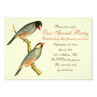 Java Sparrow 5x7, 5x7 Paper Invitation Card