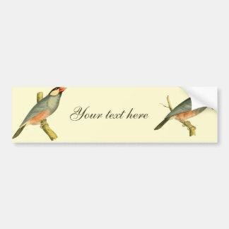 Java Sparrow, Car Bumper Sticker