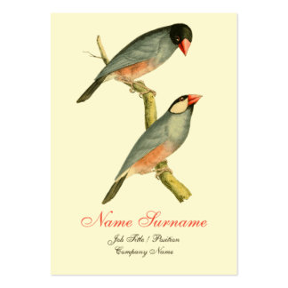 Java Sparrow, Large Business Cards (Pack Of 100)