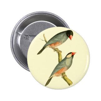 Java Sparrow, Button