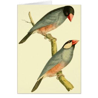 Java Sparrow, Greeting Card