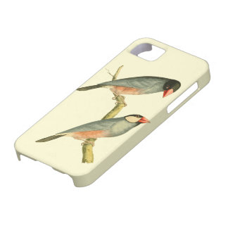 Java Sparrow, iPhone 5 Covers