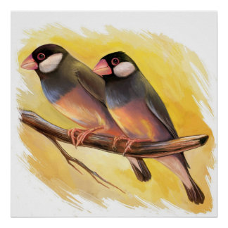 Java Sparrow finches realistic painting Poster