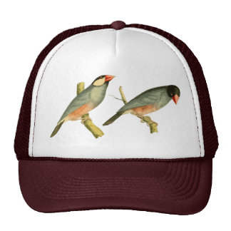 Java Sparrow, Trucker Hat