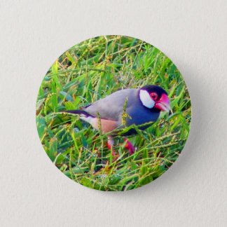 Java Sparrow in the grass in Hawaii Pinback Button