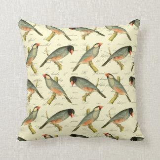 Java Sparrow, Pillows