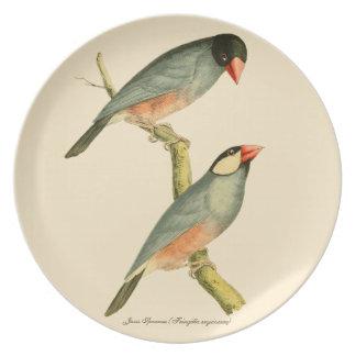 Java Sparrow, Plate