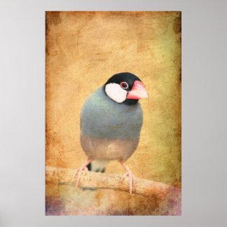 Java Sparrow Print