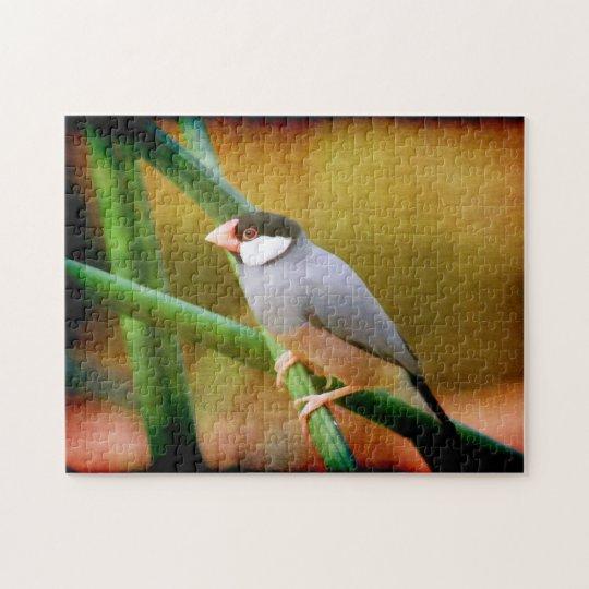 Java Sparrow puzzle