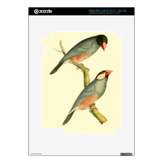 Java Sparrow, Skin For iPad 3