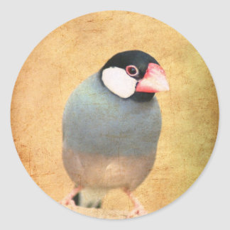 Java Sparrow Stickers