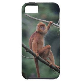 Javan black leaf monkey (Trachypithecus auratus) iPhone SE/5/5s Case