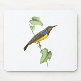 Javanese Creeper Bird Illustration by William Swai Mouse Pad