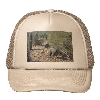 Javelina Hats