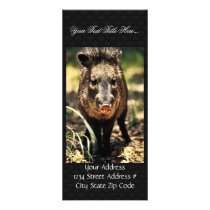 Javelina Rack Card